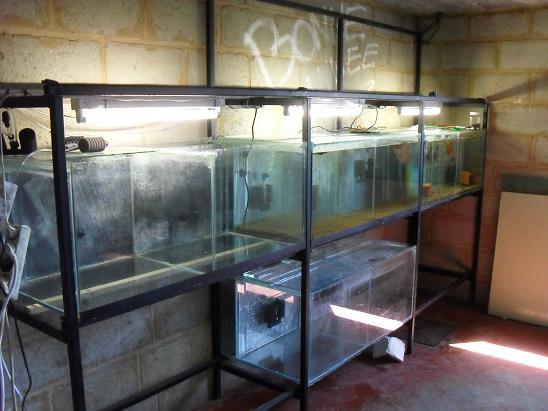 ma shrimproom et fishroom Sdc12041-1ce7e4d