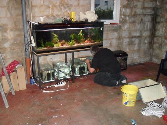 ma shrimproom et fishroom Sdc12136-1d75d97