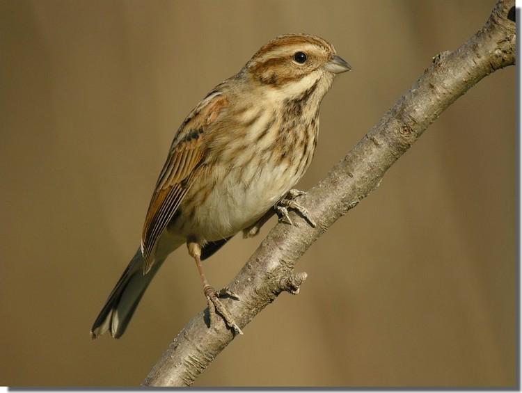 Forum image nature afficher le sujet petits oiseaux for Les petits oiseaux