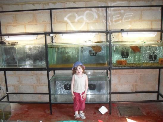 ma shrimproom et fishroom Sdc12036-1ce7e3e