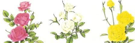 http://img24.xooimage.com/files/8/9/9/rosiers-miniatures-1b9dba2.jpg