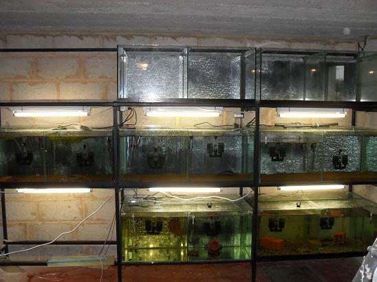 ma shrimproom et fishroom Sdc12062-1d0f361